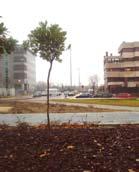 Rotonda en la Avenida Arroyo de la Vega en Alcobendas