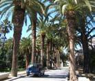 Mantenimiento de jardines en San Roque